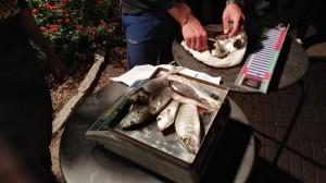 pesa del pescato